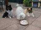 Geburtstag A-Wurf 11 Jahre_3