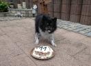 Geburtstag A-Wurf 11 Jahre_5
