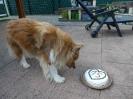 Geburtstag Merlin 15 Jahre_3